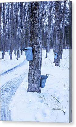 Vermont Maple Syrup Buckets Canvas Print by Tom Singleton
