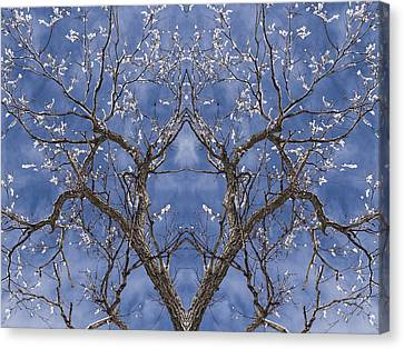 Vermont Winter Mirror Trees Snow Sky Canvas Print by Andy Gimino