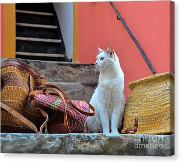 Vernazza Shop Cat Canvas Print