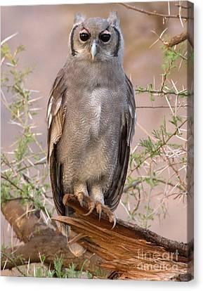 Canvas Print featuring the photograph Verreaux Eagle-owl by Chris Scroggins