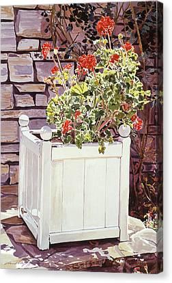 Versaille Box Of Geraniums Canvas Print by David Lloyd Glover