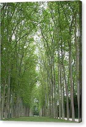 Canvas Print featuring the photograph Versailles Tree Garden 2005 by Cleaster Cotton