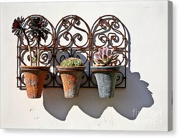 Vertical Cacti Garden Canvas Print