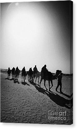vertical hot sun beating down on sands and camel train in the sahara desert at Douz Tunisia Canvas Print by Joe Fox