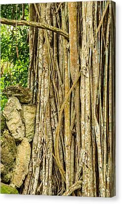 Gnarly Canvas Print - Vertical Vines by Jess Kraft