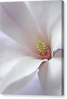 Canvas Print featuring the photograph Vertical White Flower Magnolia Spring Blossom Floral Fine Art Photograph by Artecco Fine Art Photography