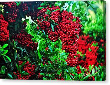 Very Berry Canvas Print by Kaye Menner