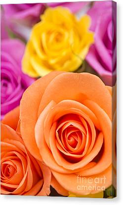 Close Focus Floral Canvas Print - Very Bold Bunch by Anne Gilbert