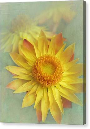 Very Yellow Canvas Print by David and Carol Kelly