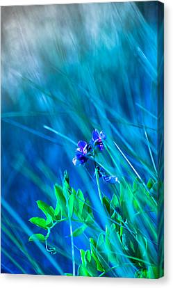 Canvas Print featuring the photograph Vetch In Blue by Adria Trail