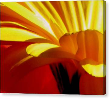 Vibrance  Canvas Print by Karen Wiles