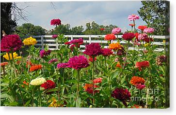 Vibrant Zinnia Garden Canvas Print by Charlotte Gray