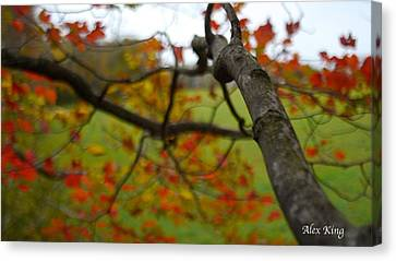 Canvas Print featuring the photograph View From A Tree by Alex King