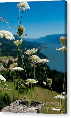 View From Cape Horn Canvas Print by Cari Gesch