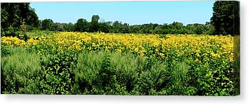 View Of A Field, Abshire Prairie Canvas Print by Panoramic Images