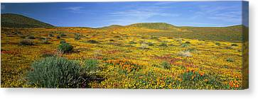 View Of Blossoms In A Poppy Reserve Canvas Print by Panoramic Images