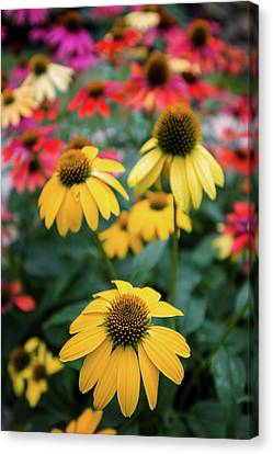 Garden Scene Canvas Print - View Of Flowers In A Garden, Garden by Panoramic Images