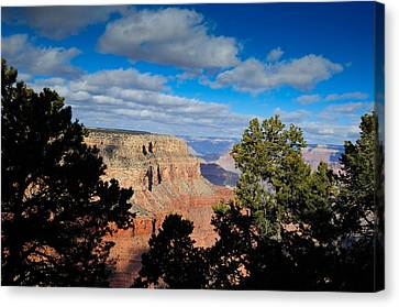 Grand Canyon Through The Junipers Canvas Print