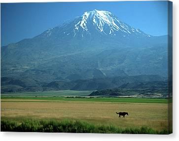View Of Mount Ararat In Turkey Canvas Print by Cagan H. Sekercioglu