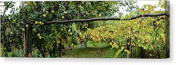 Romania Canvas Print - View Of Pear Trees, Bradu, Arges by Panoramic Images