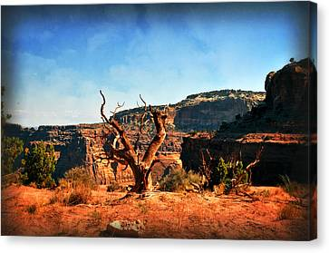 View Of The Canyon Canvas Print by Marty Koch