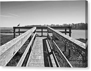 View Of The Elkhorn Slough From A Platform.  Canvas Print by Jamie Pham