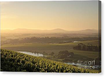 View Over Vines Canvas Print