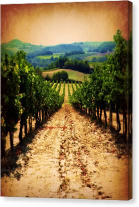 Canvas Print featuring the photograph Vigneto Toscana by Micki Findlay