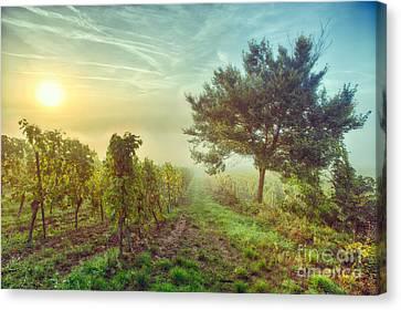 Vignoble Alsacien Canvas Print