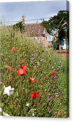 Village Life Canvas Print by Paul Lilley