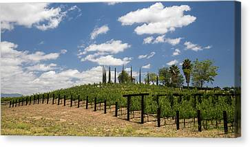 California Vineyard Canvas Print - Vine No Hollywood by Peter Tellone