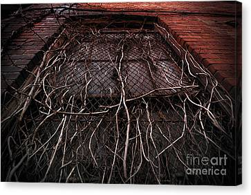 Vine Of Decay 1 Canvas Print by Amy Cicconi
