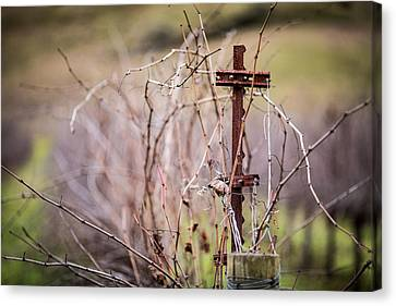 Vinepost Canvas Print by Mike Lee