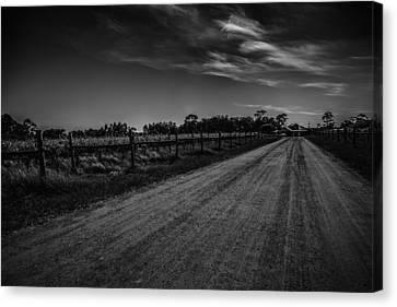 Vines Line The Path Canvas Print by Shari Mattox