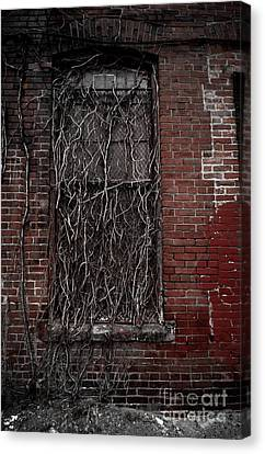 Vines Of Decay Canvas Print by Amy Cicconi