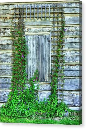 Cabin Window Canvas Print - Vines Of Metamora by Mel Steinhauer