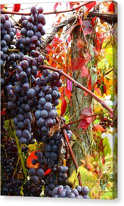 Concord Grapes Canvas Print - Vines Of October by Roger Bailey