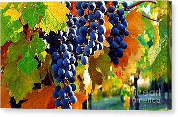 Vineyard 2 Canvas Print by Xueling Zou