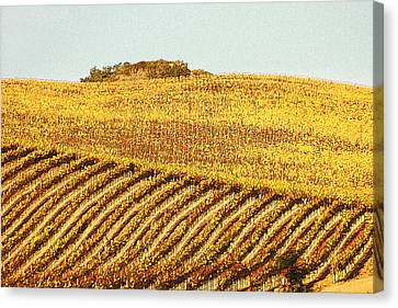 Vineyard Abstract Canvas Print by Art Block Collections