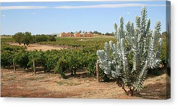 Vineyard And Winery Canvas Print by Carl Koenig