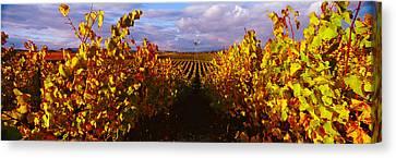 Napa Canvas Print - Vineyard At Napa Valley, California, Usa by Panoramic Images