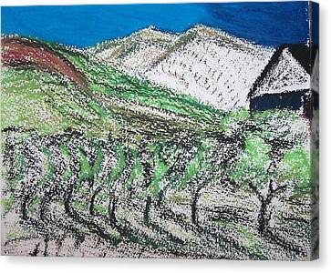 Vineyard Canvas Print by Charlotte Williams