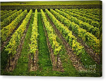 Vineyard Canvas Print by Elena Elisseeva