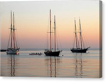 Vineyard Harbor Sunrise Canvas Print by Dan Myers
