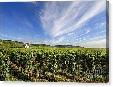 Vineyard Hut. Vineyard. Cote De Beaune. Burgundy. France. Europe Canvas Print