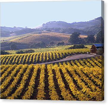 6b6386-vineyard In Autumn Canvas Print
