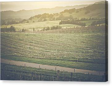 Vineyard In Spring With Vintage Instagram Film Style Filter Canvas Print by Brandon Bourdages