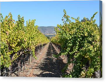 Vineyard In The Fall Canvas Print by Brandon Bourdages