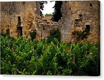 Vineyard In The Ruins Canvas Print by Christine Burdine