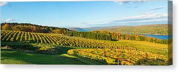 Vineyard, Keuka Lake, Finger Lakes, New Canvas Print by Panoramic Images